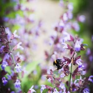 Buzz buzzzzz...
