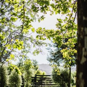 A sun-kissed garden