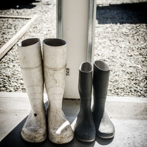 Wellies for oyster farming