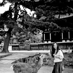 Nara and the deers