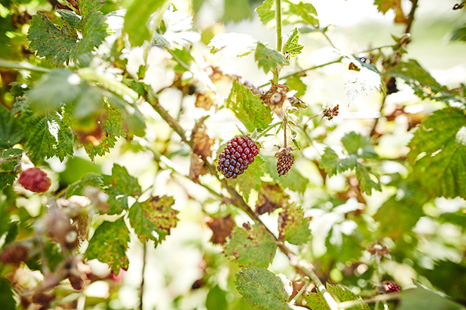 Maui-Gunnadoo-Berries-3