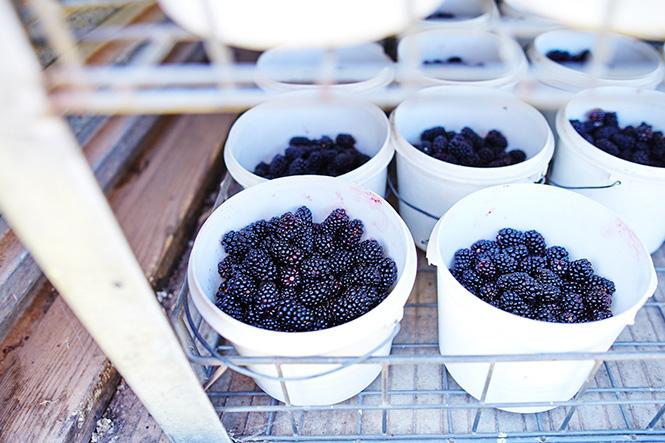 Maui-Gunnadoo-Berries-5