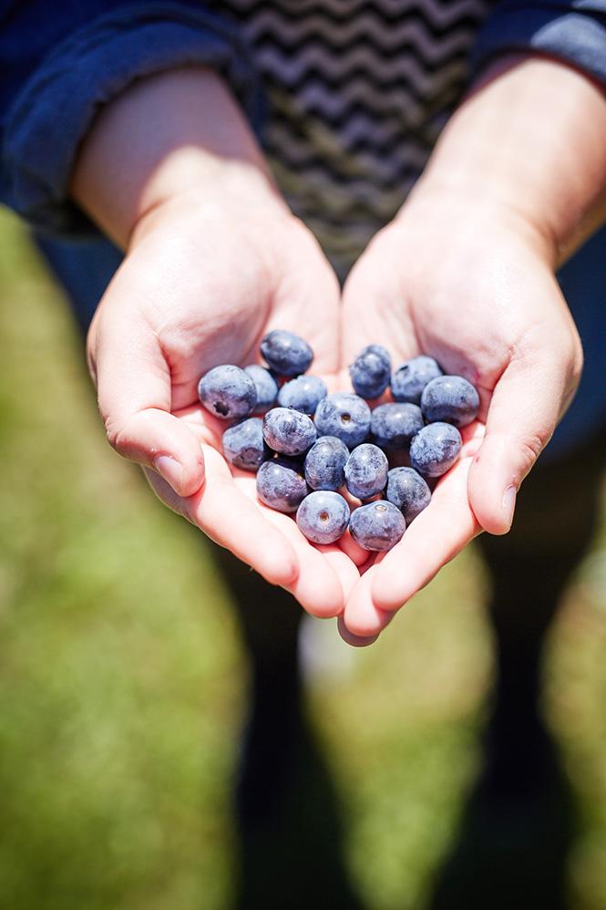 Maui-Gunnadoo-Berries-6