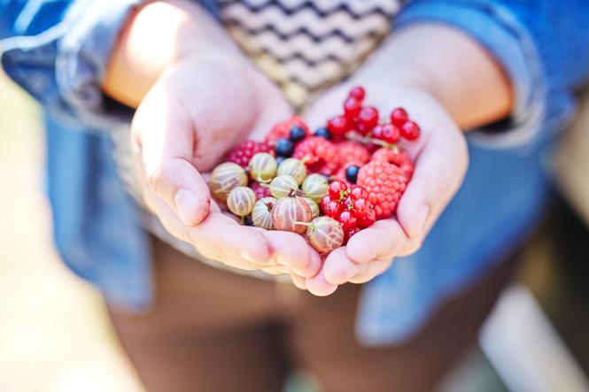Maui-Gunnadoo-Berries-9